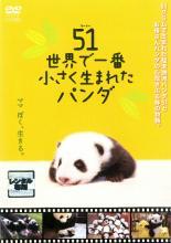 追跡可能メール便発送可 SALE 中古 上等 DVD お買い得 ウーイー 51 世界で一番小さく生まれたパンダ レンタル落ち