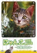 【中古】DVD▼にゃんこ THE LOVE 安曇野ねこ▽レンタル落ち