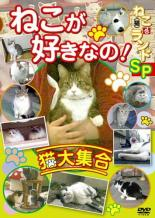 追跡可能メール便発送可 中古 DVD ねこ 人気商品 猫 ランドSP 爆買い新作 ねこが好きなの 猫大集合 ざ レンタル落ち