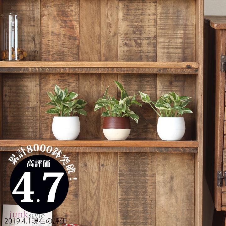 育てやすい セール おしゃれ観葉植物 9 29~のお届け ミニball鉢 今月のおすすめ ポトスエンジョイ 店内全品対象 観葉植物