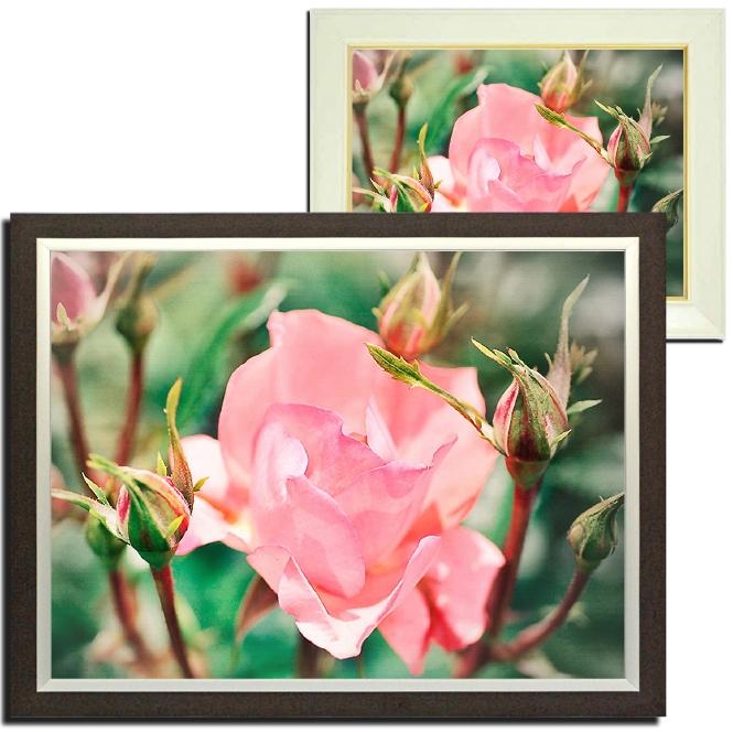 壁掛けアート アートパネル 風景画 フォトグラファー y2-hiro 写真 額付き バラ 薔薇 一輪 植物 緑 ピンク 自然 春 夏 母の日 花 ギフト インテリア雑貨 キャンバスジグレー版画