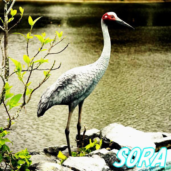 湖畔の豪州鶴