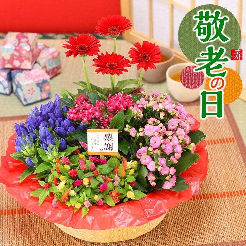 敬老の日 誕生日 商舗 花 ギフトプレゼント記念日 お祝 送別 地域別送料無料 ショッピング 寄せ鉢 ギフト 5種の花で作る季節の花かご 鉢植え 配送日指定可