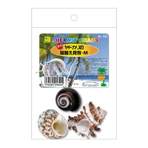※貝殻のサイズの表記は目安です。 [三晃商会]オカヤドカリの宿替え貝殻(M)
