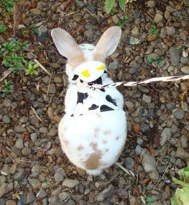 做年糕的[供兔子使用的马具]莫莫马具