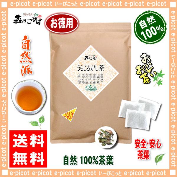 【お徳用TB】 うらじろがし茶 (3g×80p)「ティーパック」≪ ウラジロガシ茶 100%≫ 裏白樫茶 森のこかげ 健やかハウス