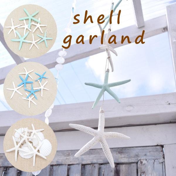 Shell Starfish Display Window Star Fish
