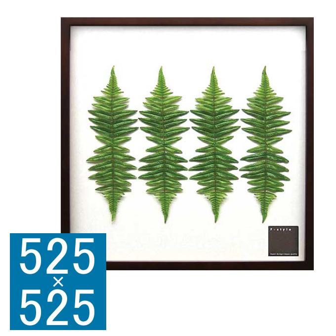 『アートフレーム F-style Frame 500 Rumobra adiantiformis』 アートフレーム フレーム 壁飾り 額縁 壁掛けインテリア 壁掛けアート フレームアート ディスプレイフレーム インテリアフレーム グリーンアート フェイク