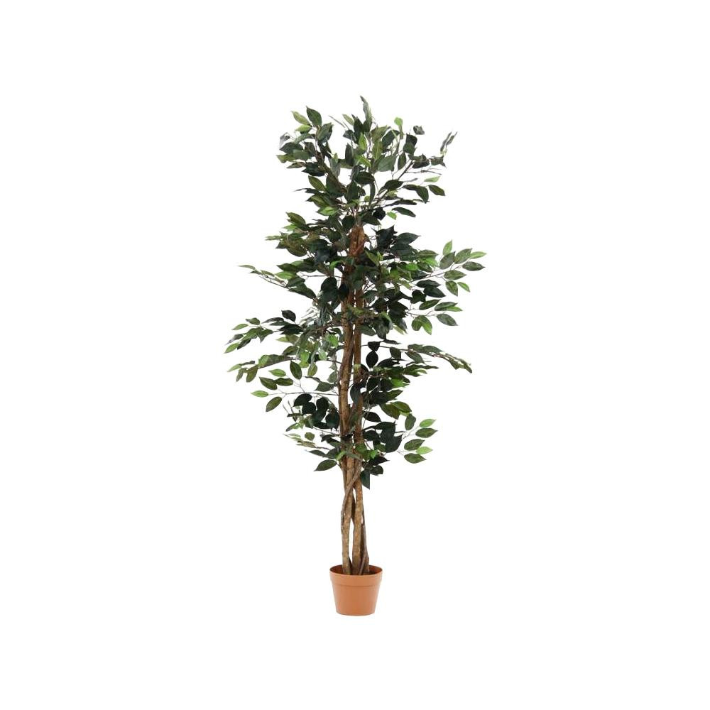 観葉植物 フィカス 690 A 52661 [ラッピング不可][代引不可][同梱不可]