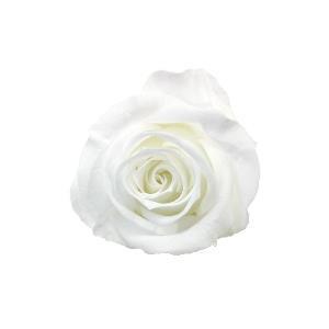verdissimo ヴェルディッシモ バルク プリンセスローズ ホワイト 59201 [ラッピング不可][代引不可][同梱不可]