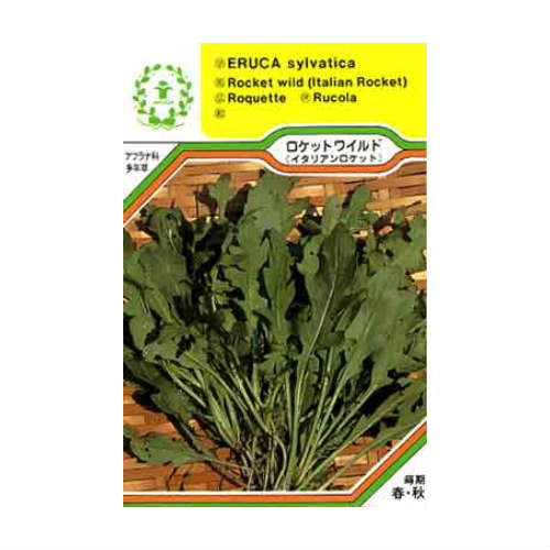 希少 ロケットワイルド セルバチコ 一部予約 イタリアン ハーブの種 西洋野菜 ネコポス対応可能