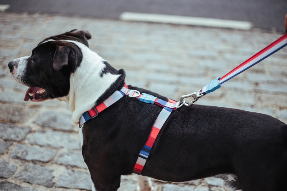 zee.dog (G dog) H-HARNESS H- harness large size