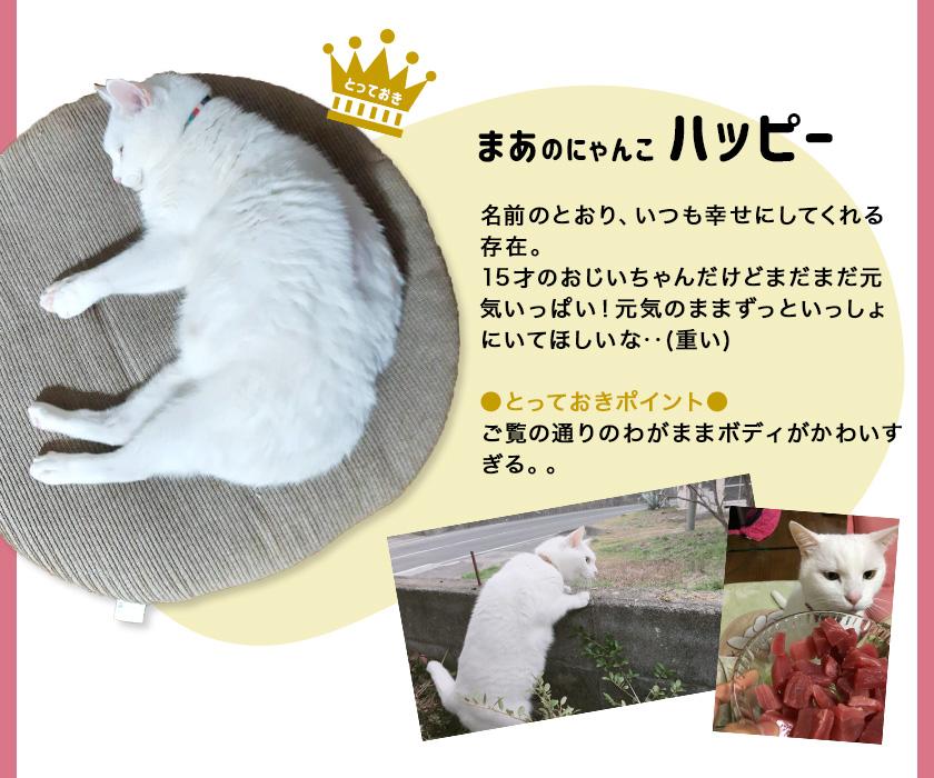 スタッフの猫たち