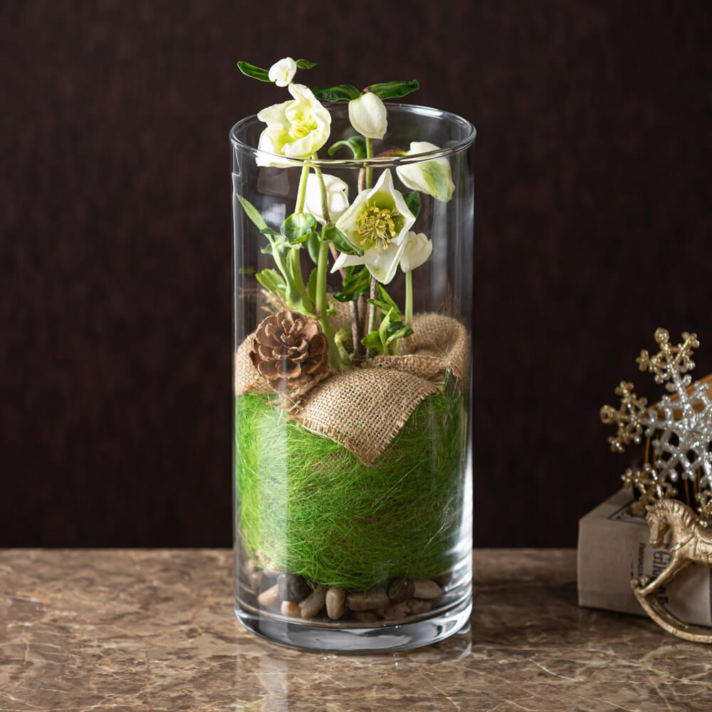 鉢植え「Helleborus in Glass」 クリスマスローズ クリスマス Xmas プレゼント ギフト 花 冬 誕生日