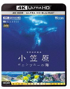 世界自然遺産 小笠原 ~ボニンブルーの海~(4K ULTRA HD)