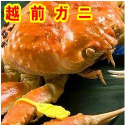 人生を豊かにしてくれる品格ある味越前ガニ(中)【着日指定不可】