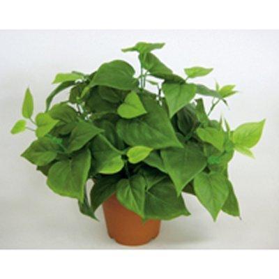送料無料 即納送料無料 アートクリエイション 光触媒人工植物 ライムポトス S3608-40N セール価格 約W400×D400×H360mm