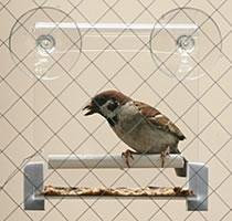 送料無料 ペッズイシバシ 2020 新作 贈呈 クオリス 野鳥のエサ台 窓ガラス用