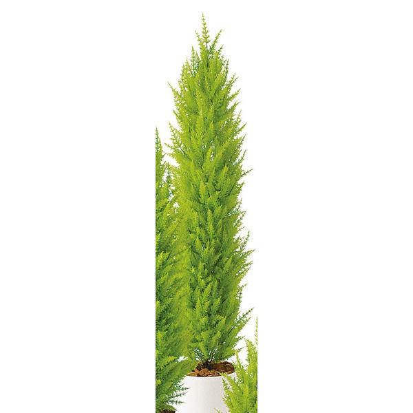 SG ゴールドクレストツリー 90633 1.8m 【人工樹木 作り物】【ECJ】