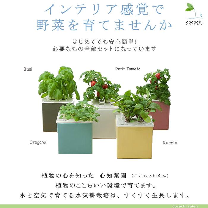 心的智慧花园 cocochi 赛恩) (白色) 番茄种子和肥料与 !水培试剂盒的佩蒂特正宗教养方式 !