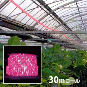 植物育成 LED ロープライト [赤・青] 防滴 30m ロール売り 水耕栽培 ガーデニング ■直送■