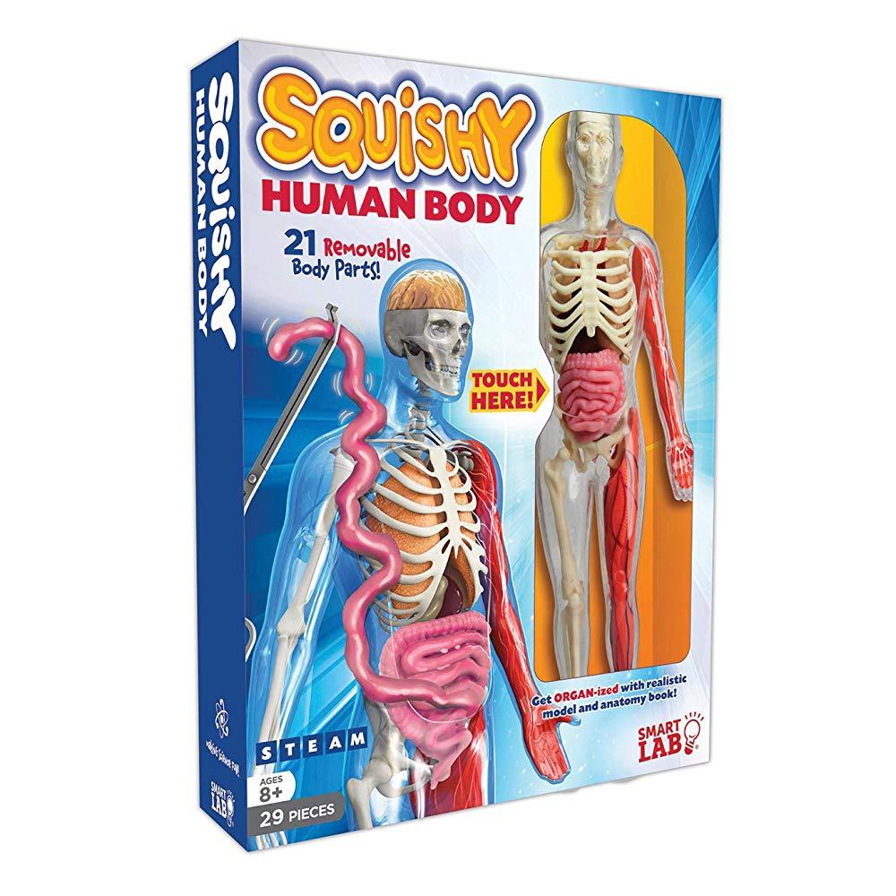 スマートラボ 人体模型 Squishy Human Body 輸入品