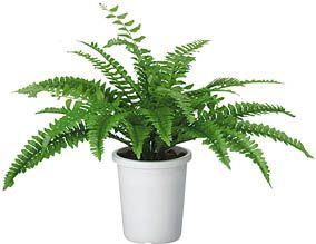 コクヨ 人工植物〈アイレストグリーン〉 ボストンファーン【PX-G8830】