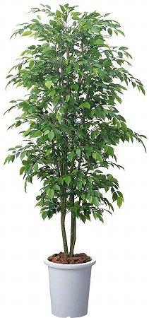 コクヨ 人工植物〈アイレストグリーン〉 ベンジャミンニチイダ【PX-GBD18】