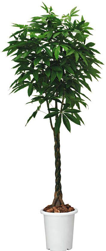 コクヨ 人工植物〈アイレストグリーン〉 パキラ 高さ1400mm【PX-GXP14】