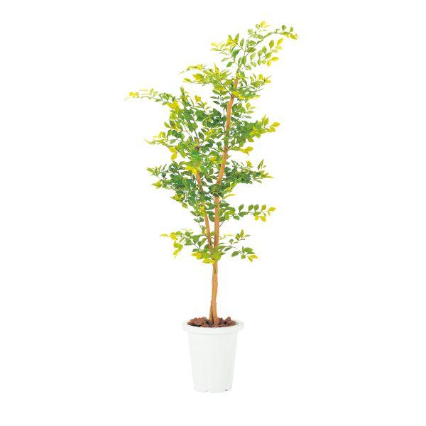 【オフィスグリーン】ゴールデンリーフ 人工植物 【国産】【G-GL】