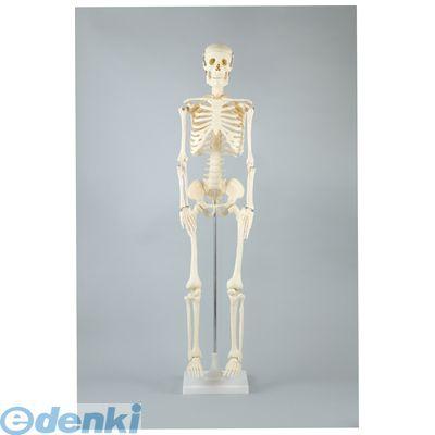 アーテック ArTec 008850 人体骨格模型 85cm 4521718088501