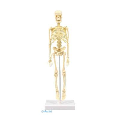 アーテック ArTec 093609 人体骨格模型 30cm学習セット ケ-ス入 4521718936093