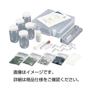 直送・代引不可 光合成色素分離セット TLC-5 (5人分) 別商品の同時注文不可