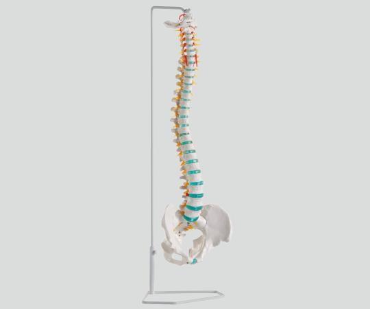 アズワン ナビス 脊椎可動型モデル A250 スタンド付き (8-8419-01)