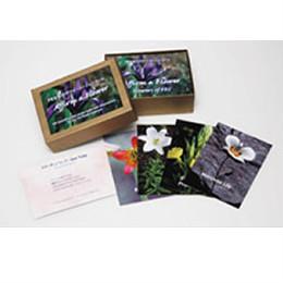 FESアファメーションカード(103枚) 日本国内正規品 【 FESフラワーエッセンス フラワーエッセンス FES フラワーエッセンス カード 】