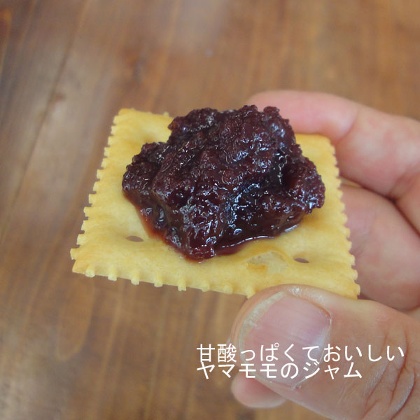 (しゅうほう) (山桃) 果樹の苗/ ・オス木セット 2種受粉樹セット:秀峰 ヤマモモ