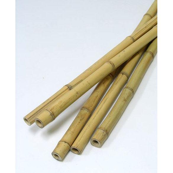 天然竹支柱 白竹 長さ1.8m 50本セット