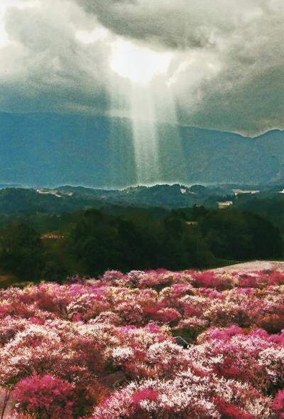 【送料無料】秋元隆良 奇跡の写真 「光立つ時代(令和)」