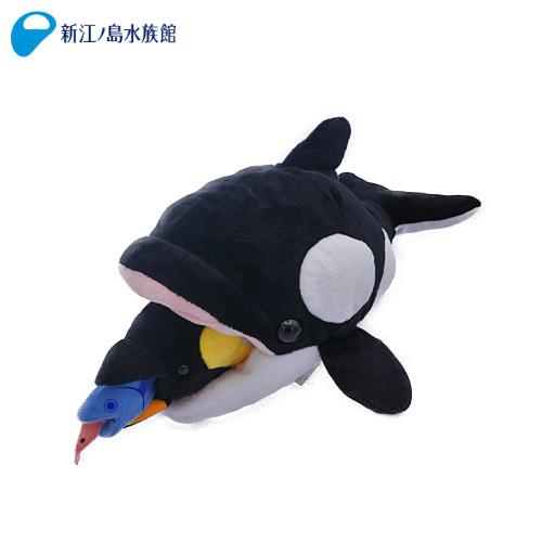 食物連鎖南極 シャチ