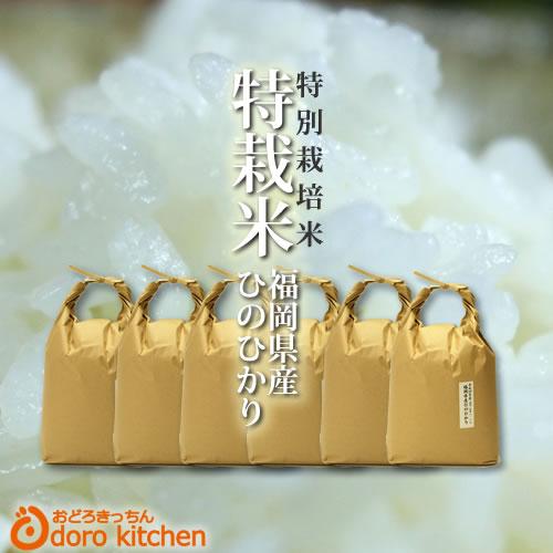 福岡県産 たごもり農園の特別栽培米 ひのひかり 30年産 30kg(5kg×6)新鮮 玄米 白米 分つき米 [k][*]