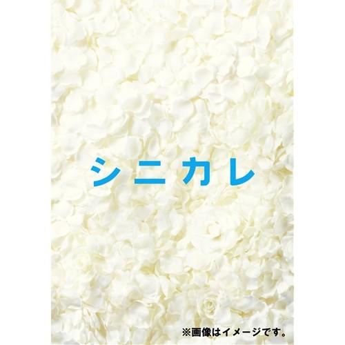 【送料無料】シニカレ完全版 DVD-BOX 【DVD】