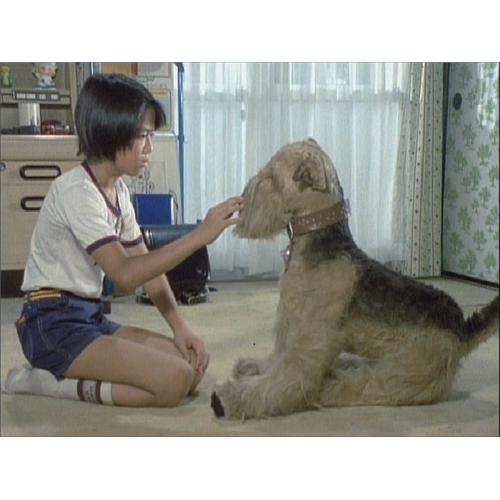 【送料無料】ふしぎ犬トントン HDリマスター DVD-BOX 【DVD】