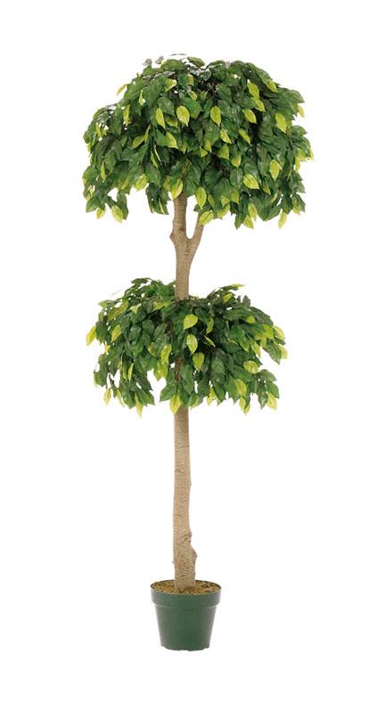 【店舗・イベント用品】【グリーン(観葉植物)】フィカスツリー