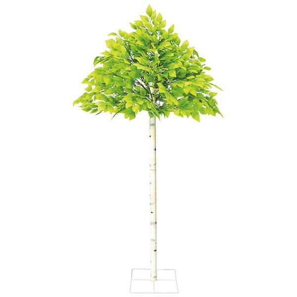 若葉白樺立木セット H200cm / 装飾 飾り ディスプレイ 初夏