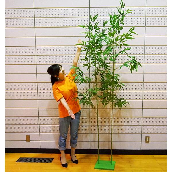 七夕笹 竹林のような大きい見応えのある本格笹2本立てセット 240cm+210cm