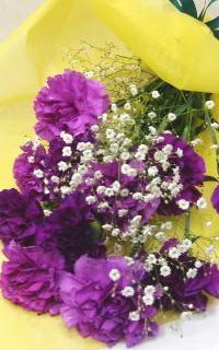 大人気のあるカーネーション ムーンダスト 8本の花束