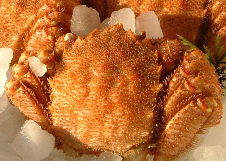 【ふるさと納税】冷凍ボイル毛がに 1尾(約500g)