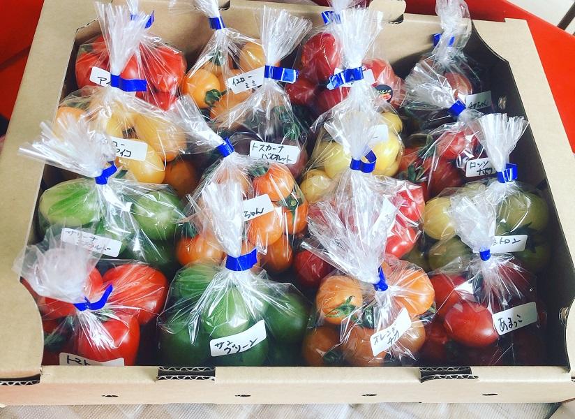ふるさと納税 おくやま農園 16種類ミニトマト食べ比べセット セールSALE%OFF 初売り 期間限定