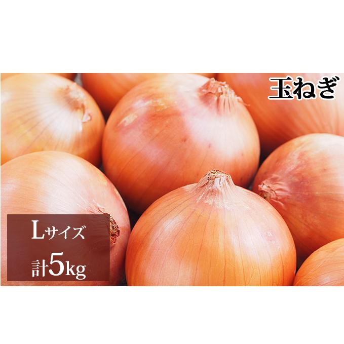 物品 北海道新篠津村 ふるさと納税 新しのつ産 玉ねぎLサイズ 約5kg 玉ねぎ 国内即発送 野菜 たまねぎ お届け:2021年9月上旬から随時出荷