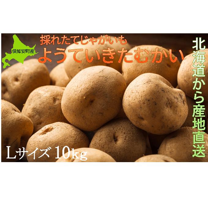 【ふるさと納税】ようていじゃがいも【きたかむい】Lサイズ10kg≪北海道ようてい産≫ 【野菜・いも・ジャガイモ】 お届け:2020年1月中旬~2020年4月下旬まで